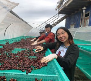 the shed coffee farm